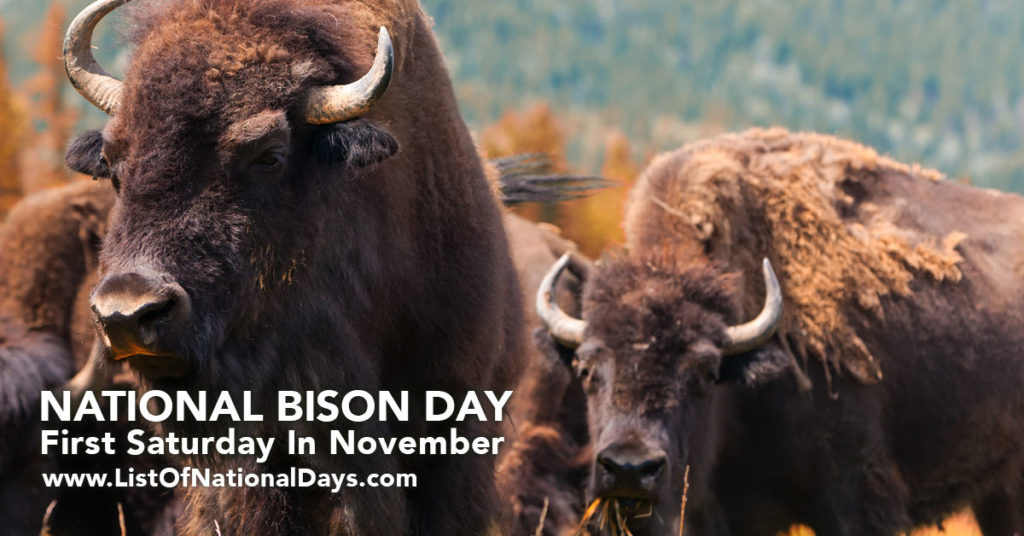 A close up of a herd of bison